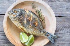 Grillade Dorade Royale Fish på plattan Arkivfoto