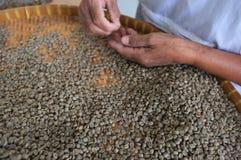 Grillade THAILÄNDSKA kaffebönor för begreppet, bakgrundstextur, kaffebönan för grillat ljus, det grillade medlet, mörker, organis Royaltyfria Foton