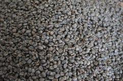 Grillade THAILÄNDSKA kaffebönor för begreppet, bakgrundstextur, kaffebönan för grillat ljus, det grillade medlet, mörker, organis Royaltyfri Fotografi