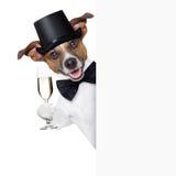 Grillage de chien Image libre de droits