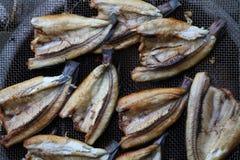 Grillant le snakehead (poissons) Image stock