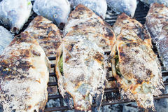 Grillat fiskstänk med salt Royaltyfri Fotografi