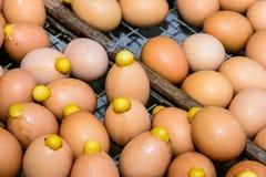 Grillat varmt för ägg Arkivbilder