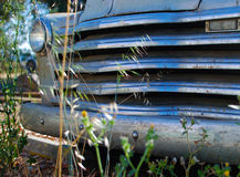 Grille of Abandoned Car. Among the weeds Royalty Free Stock Photos