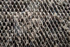 Grille en acier rouillée sale avec la poussière et des toiles d'araignée, fond grunge Images stock