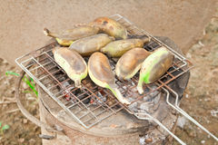 Grilled bananas. Stock Photography