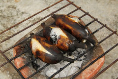 Grilled bananas. Stock Image