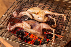 Grilled birds Royalty Free Stock Photography