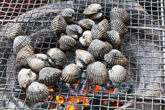 Grilled Blood Clam Stock Photos