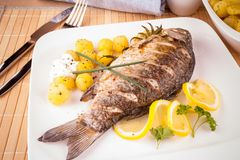 Grilled carp fish with rosemary potatoes and lemon Stock Images