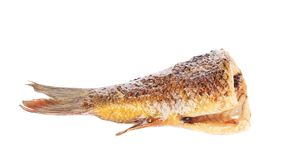 Grilled carp fish tail. Stock Image