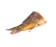 Grilled carp fish tail. Stock Photography