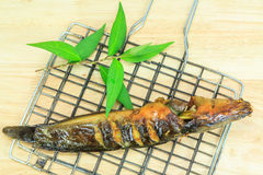 Grilled catfish and gridiron Stock Images