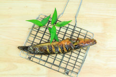 Grilled catfish and gridiron Stock Photography