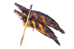 Grilled catfish Stock Photography