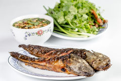 Grilled catfish Stock Images