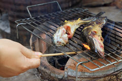 Grilled catfish Royalty Free Stock Photography