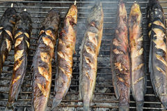 Grilled catfish Royalty Free Stock Photo