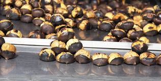 Grilled chestnut Royalty Free Stock Photography
