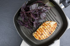 Grilled chicken breast steak with violet basil on teflon pan gri Stock Images