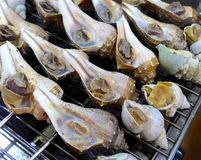 Grilled conch closeup at market Royalty Free Stock Image