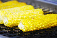 Grilled Corn. Cooking Corn on the barbecue Royalty Free Stock Photography