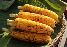 Grilled corn. On banana leaf in wicker basket Royalty Free Stock Images