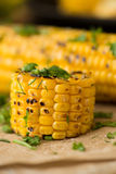 Grilled Corn on the cob with Chili, Cilantro, and Lime Royalty Free Stock Images