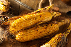 Grilled Corn on the Cob Stock Photography