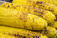 Grilled corn Stock Photography