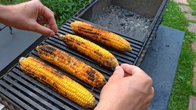 Grilled corn grilled on fire. On a dark iron table. Grilled corn. Delicious street food. Summer party and grill. Hands take or. Hold Grilled corn stock photo