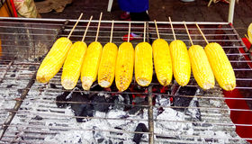Grilled corn on a hot Charcoal Stock Image