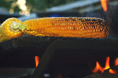 Grilled corn Stock Image