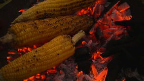 Grilled corn on the hot stove stock video