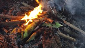 Grilled corn. In sapa, lao cai, vietnam stock footage