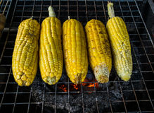 Grilled corn on the stove. Grilled corn on the hot charcoal stove Stock Images