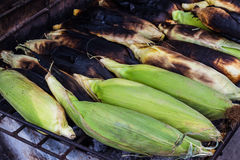 Grilled corn on stove, Thai Grilled corn. Royalty Free Stock Photography