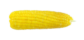 Grilled corn on a white background. Grilled corn isolate on a white background Royalty Free Stock Photo