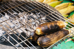 Grilled corns on a cinder stove, close up Royalty Free Stock Photo