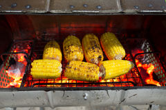 grilled corns (corn, cob) Royalty Free Stock Image