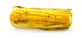 Grilled corn on white background royalty free stock photography