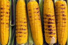 Grilled corns Royalty Free Stock Photography
