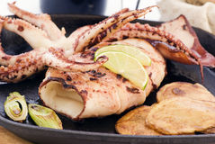 Grilled Cuttle Fish Stock Images