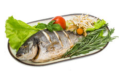 Grilled dorada Royalty Free Stock Photos