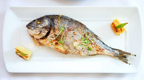 Grilled dorada fish Royalty Free Stock Photos