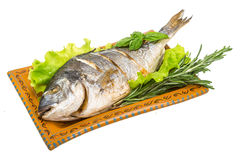 Grilled dorada Stock Images