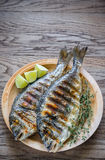 Grilled Dorade Royale Fish stock photos