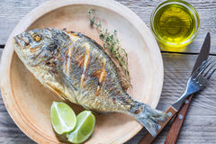 Grilled Dorade Royale Fish on the plate. Top view Royalty Free Stock Images