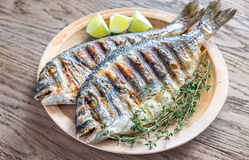 Grilled Dorade Royale Fish. On the wooden background royalty free stock image