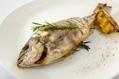 Grilled dorado fish Stock Images